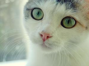 Кот или мужчина: как выбрать?